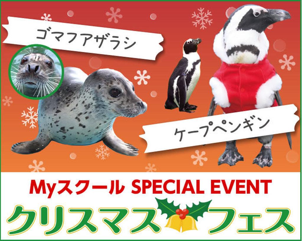 Myスクールスペシャルイベント【クリスマスフェス】あわしまマリンパーク ゴマフアザラシ、ケープペンギン特別観察タイム! 開催!!