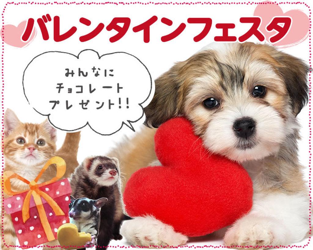2/12(日) バレンタインDAYは動物の「愛」「恋」「ハート」について学ぼう。